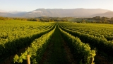 Technology needed for winegrape vineyards detection