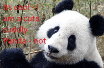Emissary Panda has teeth